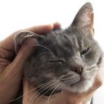 TTouch oorwerk kalmeert, verlicht pijn, en ondersteunt alle vitale levensfucties.