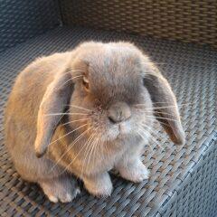 Onzindelijk konijn Jumper heeft ook recht op een happy leven.