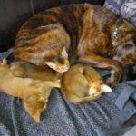 Lotte samen met de katten.