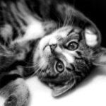 Hulp voor kat Suma ivm angst bij dierenarts en pension.